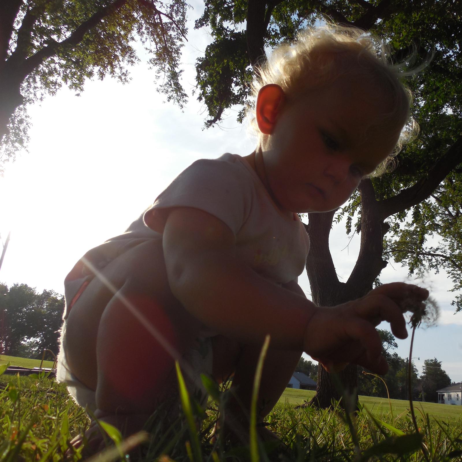 amelia dandelion kansas july 2014