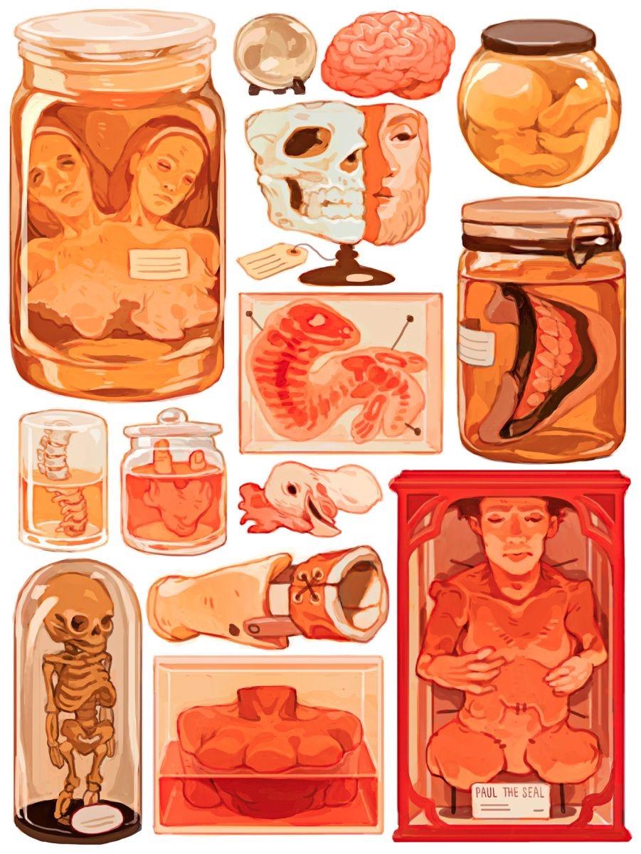 American Horror Story s04 tumblr art (1)