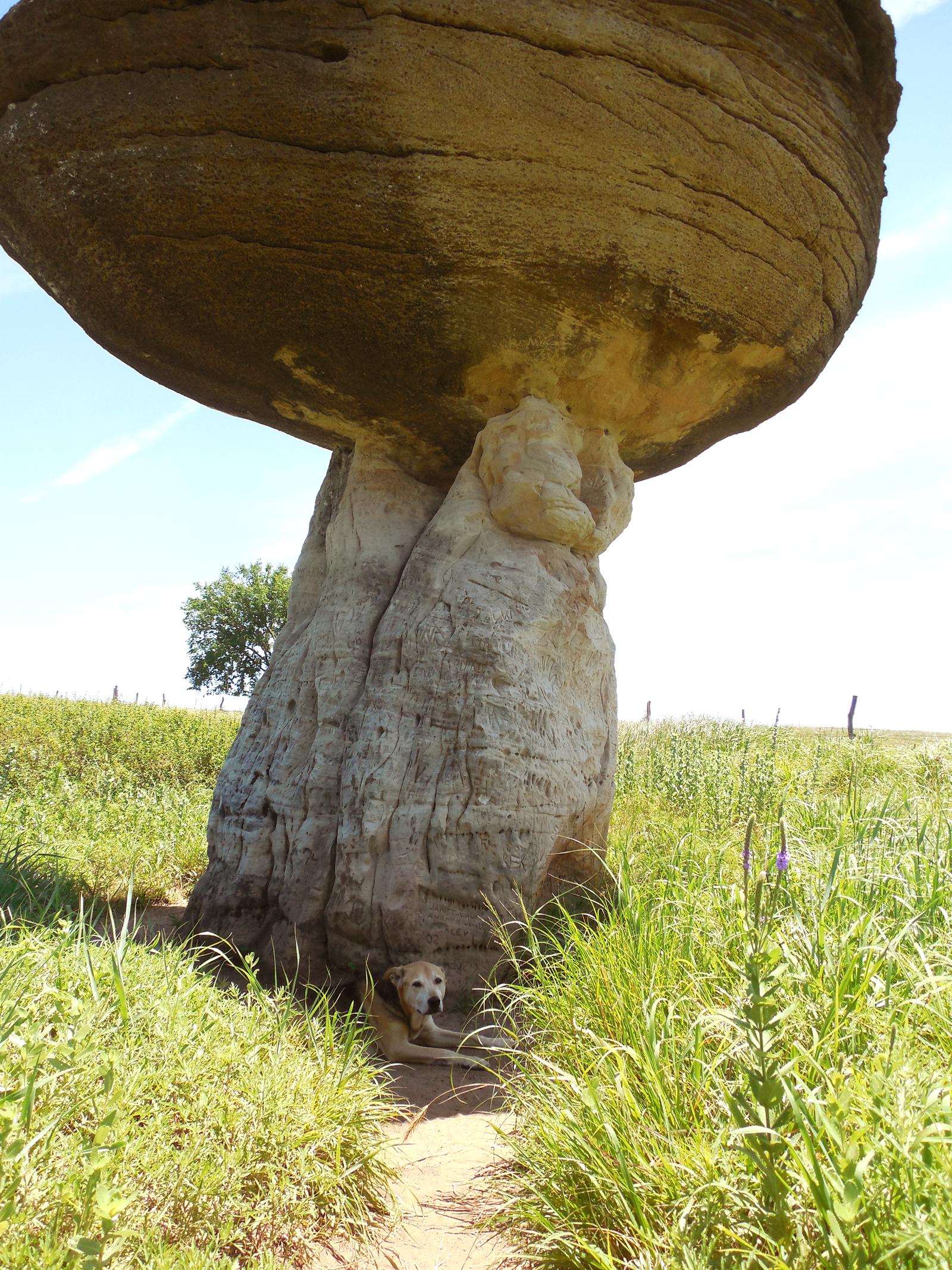 rocky mushroom rock 2014